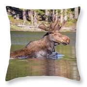 Bull Moose Goes For A Swim Throw Pillow