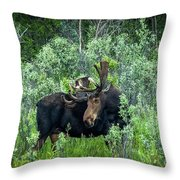 Bull Moose In The Bushes Throw Pillow