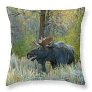 Bull Moose In The Evening Throw Pillow