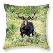 Bull Moose Stands Guard Throw Pillow
