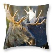Bull Moose Up Close Throw Pillow