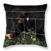Bull Nibbling On Snowberries Throw Pillow