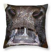 Bull Nose Throw Pillow