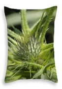 Bull Thistle - New England Throw Pillow