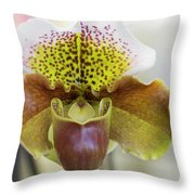 Bulldog Type Paphiopedilum Throw Pillow
