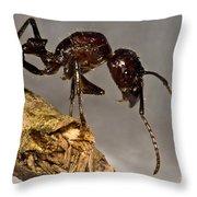 Bullet Ant Throw Pillow