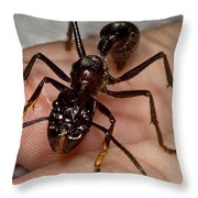 Bullet Ant On Hand Throw Pillow