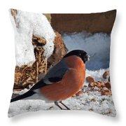 Bullfinch In The Snow Throw Pillow