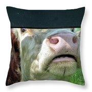 Bull's Eye Peek A Boo Deekflo Throw Pillow