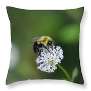 Bumble Bee On White Wild Flower On Banks Of Tennessee River At Shiloh National Military Park Throw Pillow