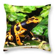 Bumble Bee Poison Frog Throw Pillow