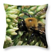 Bumblebee In The Land Of Petals Throw Pillow