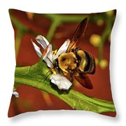 Bumblebee On A Hardy Orange Blossom 002 Throw Pillow