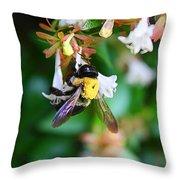 Bumblebee On Abelia Throw Pillow