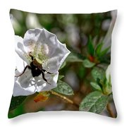 Bumblebee On White Azalea Throw Pillow