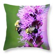 Bumblebees On Liatris Throw Pillow