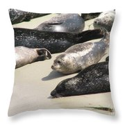 Bunch Of Harbor Seals Resting On A Beach Throw Pillow