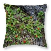 Bunchberry Berries Throw Pillow