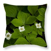 Bunchberry Blossoms Throw Pillow