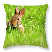 Bunny In Field  Throw Pillow