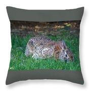 Bunny In The Backyard Throw Pillow