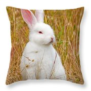 Bunny Throw Pillow
