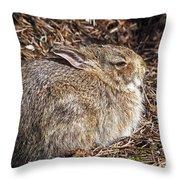 Bunny Siesta Throw Pillow