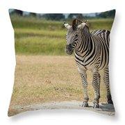 Burchell's Zebra On Grassy Plain Facing Camera Throw Pillow