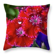 Burgandy Red Dianthus Throw Pillow