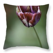 Burgandy Striped Tulip 2 Throw Pillow