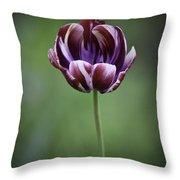 Burgandy Striped Tulip 3 Throw Pillow