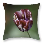 Burgandy Striped Tulip Squared Throw Pillow