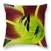 Burgundy And Yellow Lily Throw Pillow