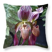 Burgundy Orchids With Stripes Throw Pillow