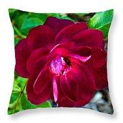 Burgundy Red Rose At Pilgrim Place In Claremont-california  Throw Pillow