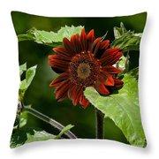 Burgundy Red Sunflower Throw Pillow