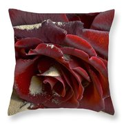 Burgundy Rose Throw Pillow