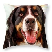 Burmese Mountain Dog Throw Pillow