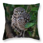 Burrowing Owl Color Version Throw Pillow