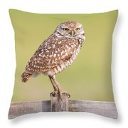 Burrowing Owl IIi Throw Pillow