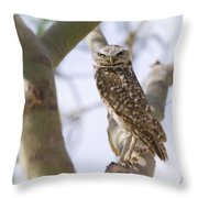Burrowing Owl Perched On A Branch  Throw Pillow