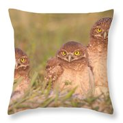 Burrowing Owl Siblings Throw Pillow by Clarence Holmes