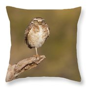 Burrowing Owl Taking A Break Throw Pillow