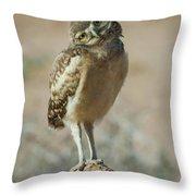 Burrowing Owlet-img_1414-2017 Throw Pillow
