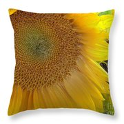 Burst Of Sunshine Throw Pillow