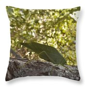 Bush Cricket Throw Pillow