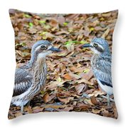Bush Stone Curlew Pair Throw Pillow