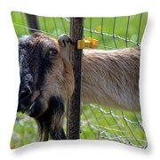 Busted Throw Pillow by Mike  Dawson