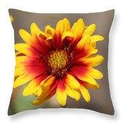 Butter Yellow And Crimson Red Coneflower Throw Pillow