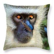 Butterflies And The Vervet  Throw Pillow
